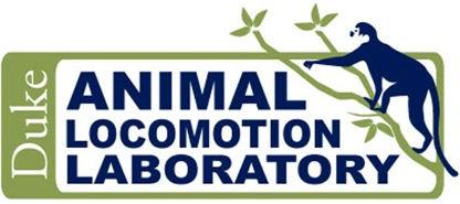Animal Locomotion Lab